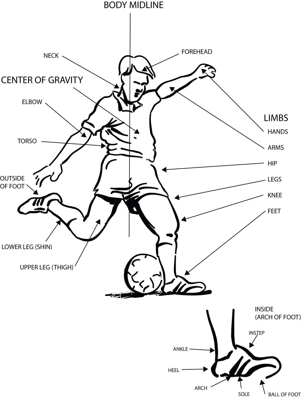 Muscles And Body Movement Coloring Pages