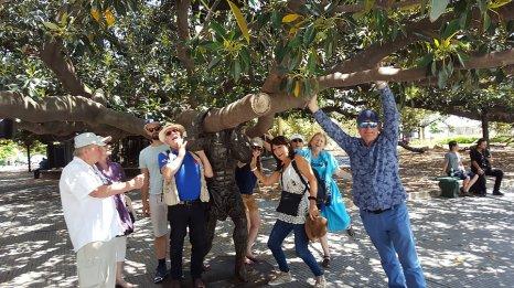 Magnolia spectaculaire à proximité du cimetière_ photo de Délia