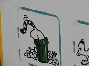 Ne reculant devant aucun obstacle, ils plongent dans les poubelles pour trouver de la nourriture…qui ne leur est pas recommandée. C'est pourquoi des panneaux indiquent qu'il ne faut pas laisser ouverts les couvercles des poubelles !
