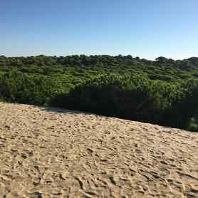 Dune envahissant la forêt de pins dans le Parc national de la Donana (Espagne) ©Antoine Bernier - Septembre 2018