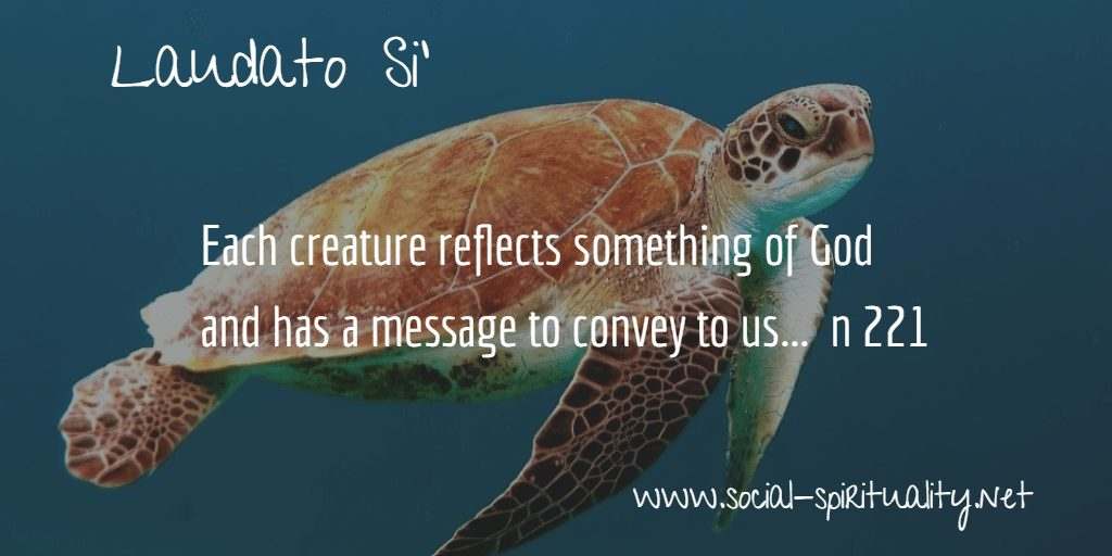 "Laudato Si' Week quote ""Each creature reflects something of God and has a message to convey to us."" n221"