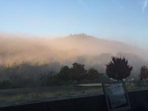 harvest-fog
