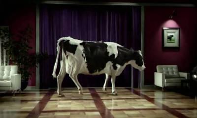 vaca que baila