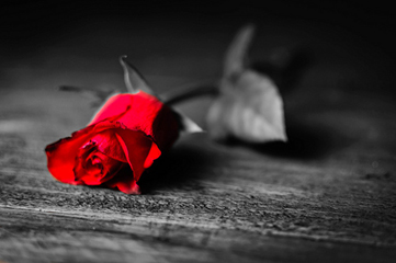 valentines day - gift -