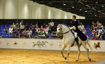 UAE_horses-Dubai