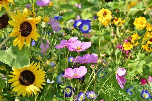 flower-meadow-3598555_640
