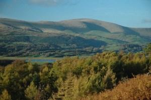 Ynyshir-Cambrian-Mountains