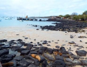 Dec. 2019 Galapagos 2 (Heather)