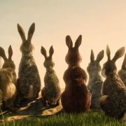 James McAvoy Leads a Star-Studded Rabbit Rebellion in the First Trailer for Watership Down 5