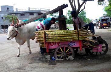 Sugar cane juice Jugaad