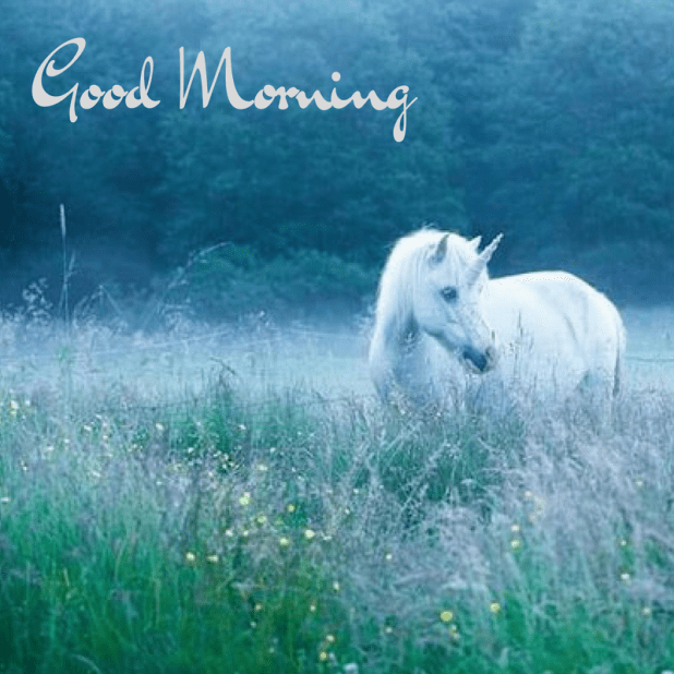 Good morning Horse image