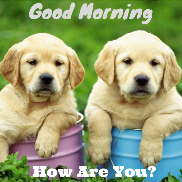 good morning twince puppy