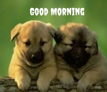 Good morning puppy images