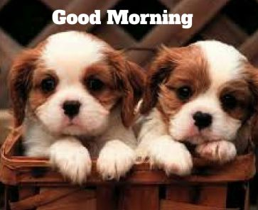 Twin puppy good morning pictures HD