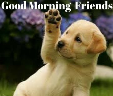 Good morning puppy hd image download for free