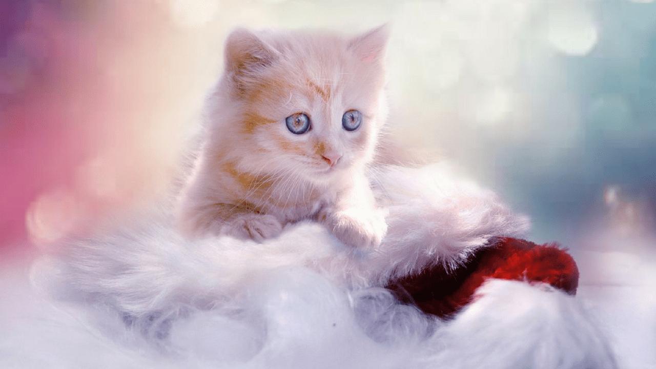cute cat wallpaper download