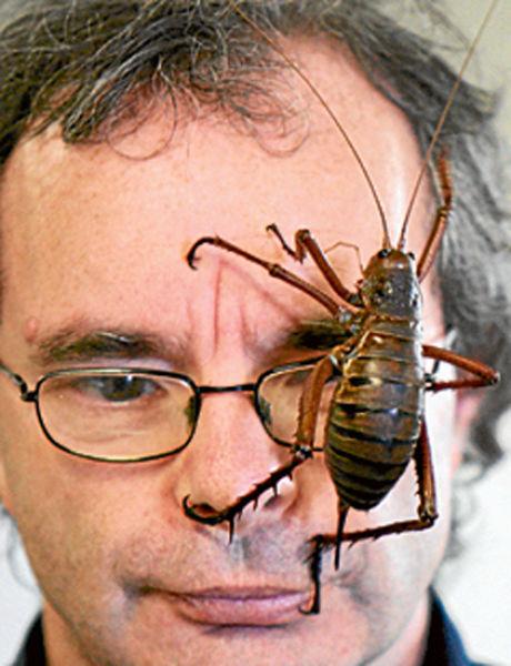 Record World Biggest Bug