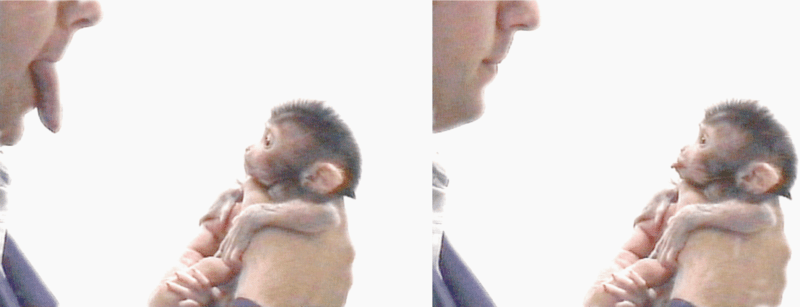 work those mirror neurons baby monkey. work it!
