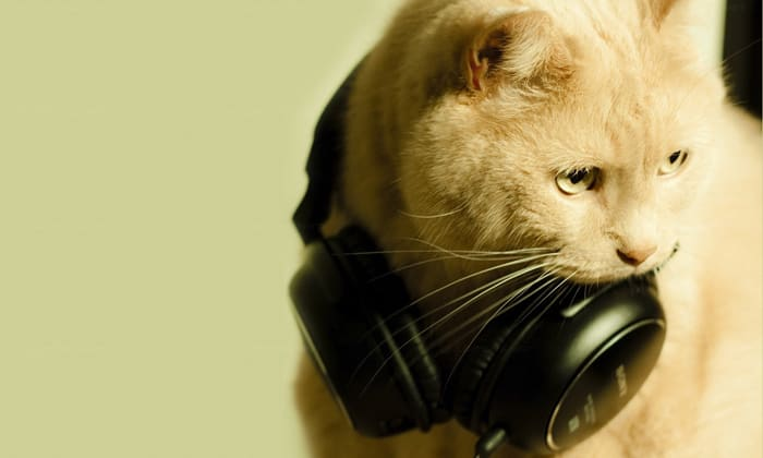 Image result for music cats