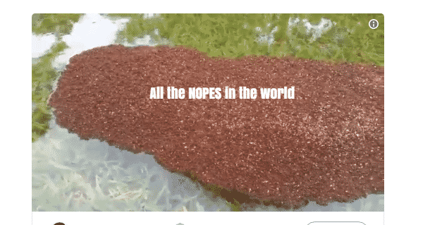 Fire Ants Have Massed Together Across Texas Following Flooding