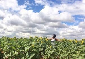 sunflower field socialstephanie.com