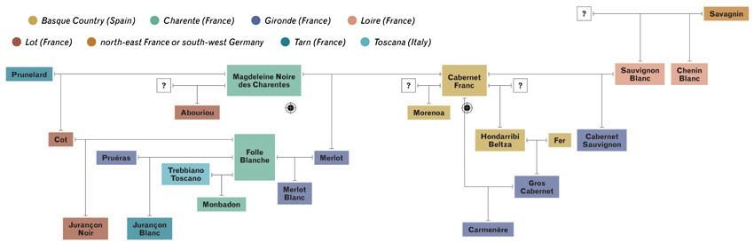 Genealogy of French grape varieties