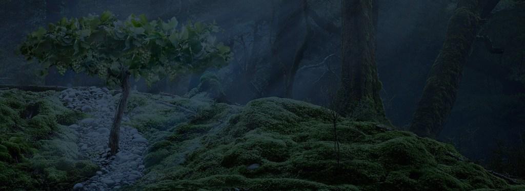 Stoneleigh Background image vine in dark woods
