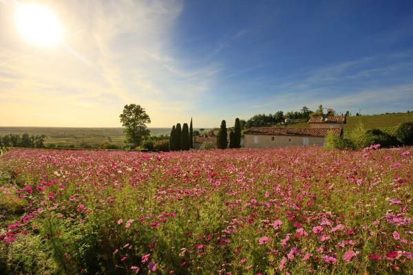 Chateau Biac Cadillac Cotes de Bordeaux Garonne River Vineyard flower field Social Vignerons