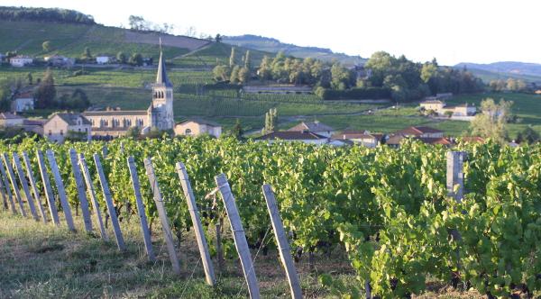 Les Vérillats single vineyard gamay grapes Village Moulin a Vent Beaujolais landscape social vignerons