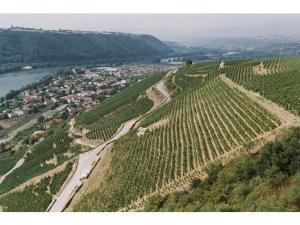 Cote Rotie Chateau d'Ampuis La Viria E. Guigal Vineyard Rhone France Social Vignerons