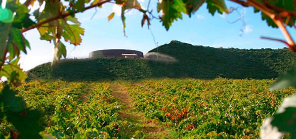 Bodega Vina Real CVNE Rioja vineyards vinedos