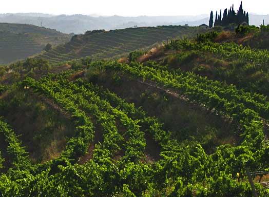 priorat-wine-region-terraces-landscape-catalunya-spain-gran-clos-winery
