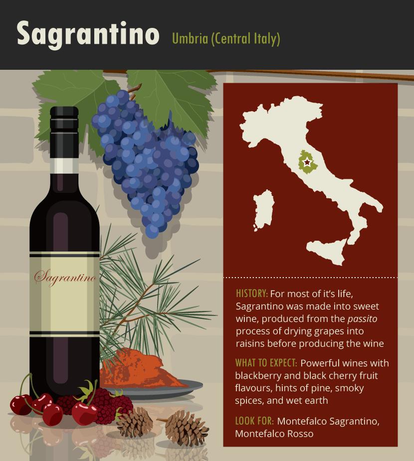 sagrantino-italian-wine-grape-variety-infographic-guide