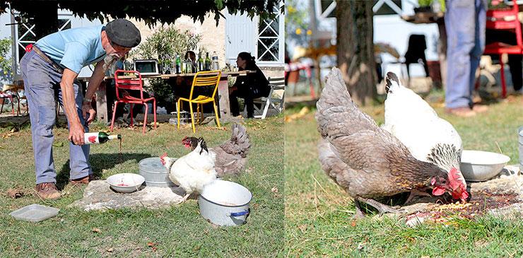 chateau-tulipe-de-la-garde-bordeaux-ilja-gort-feeding-chicken-with-wine