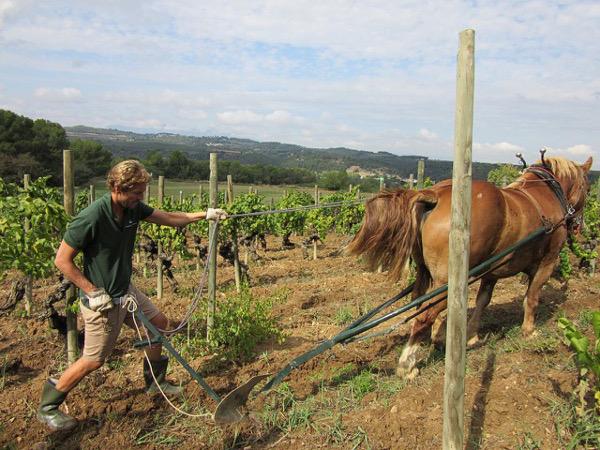 raventos-i-blanc-winery-profile-cava-sparkling-wines-man-ploughin-vineyard-with-horse-biodynamic
