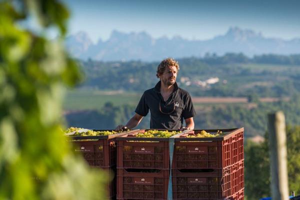 raventos-i-blanc-winery-profile-cava-sparkling-wines-man-with-grape-bin-harvest