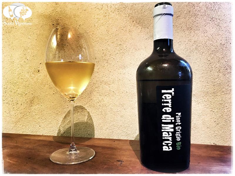 2016 Corvezzo Terre di Marca Organic Pinot Grigio, Veneto, Italy