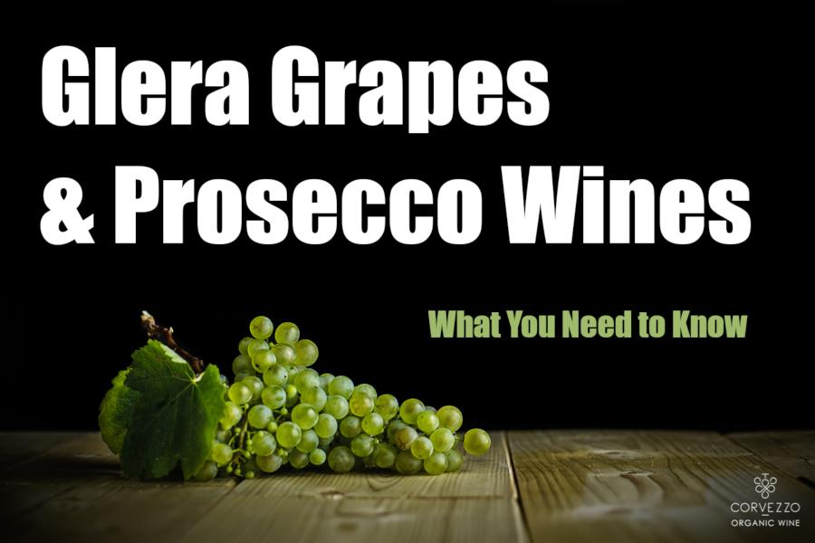 The Glera Grape behind Prosecco Wine in 1000 Words