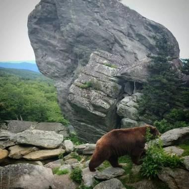 nature_bear