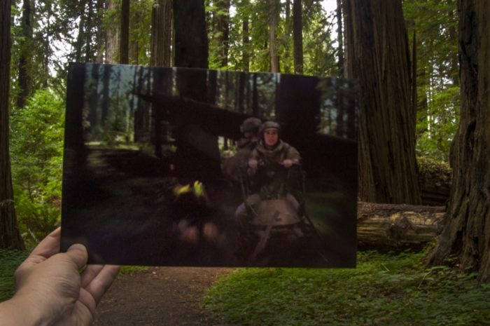 Lugares de Star Wars - Muir Woods Carolina do Norte 01 (Endor)
