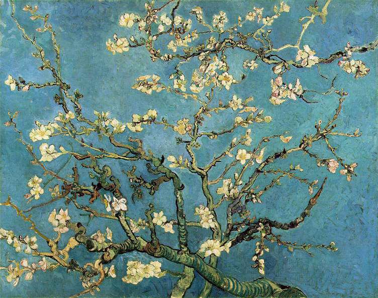 almond_blossom[1].jpg