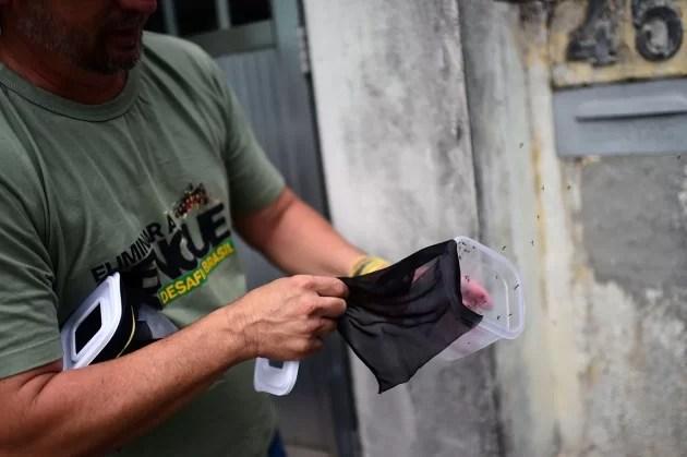 O biólogo brasileiro Robert Costa Peres libera mosquitos infectados com a bactéria Wolbachia no Rio de Janeiro. Crédito: Christophe Simon/AFP/Getty Images