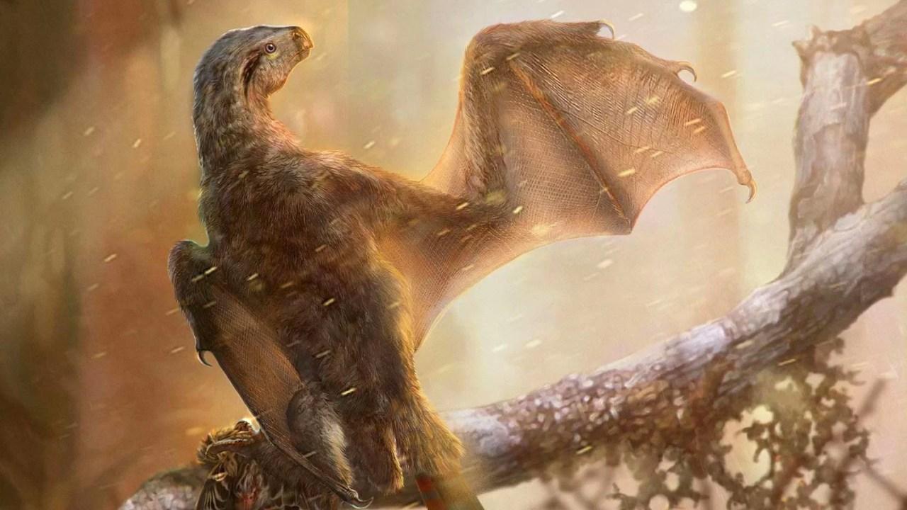 https://i2.wp.com/socientifica.com.br/wp-content/uploads/2019/05/image_7170e-Ambopteryx-longibrachium-e1557598286921.jpg?resize=1280%2C720&ssl=1