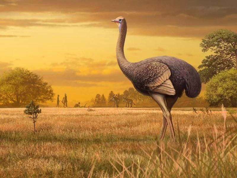 https://i2.wp.com/socientifica.com.br/wp-content/uploads/2019/06/Fóssil-de-pássaro-maior-que-avestruz.jpg?fit=800%2C600&ssl=1