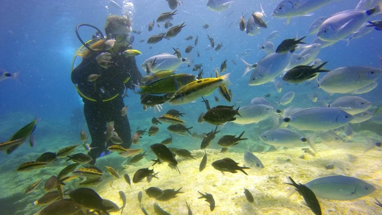https://i2.wp.com/socientifica.com.br/wp-content/uploads/2019/06/sea-water-ocean-girl-diving-underwater-490678-pxhere.com_.jpg?resize=1280%2C720&ssl=1