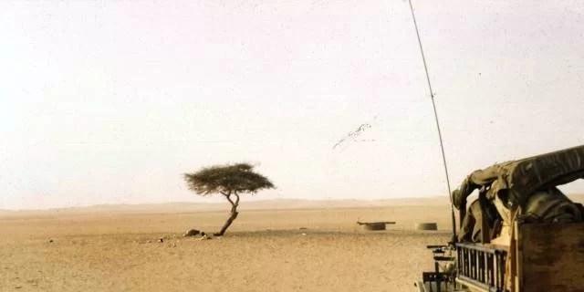 A árvore mais remota do mundo foi morta por um motorista bêbado