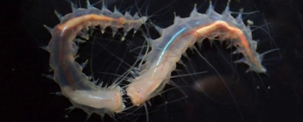 Essas pequenas criaturas produzem o som mais alto do oceano