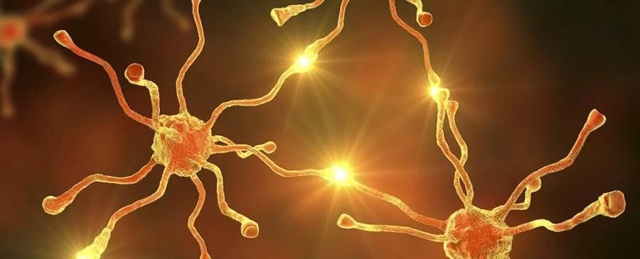 https://i2.wp.com/socientifica.com.br/wp-content/uploads/2019/08/Neurônios.jpg?resize=900%2C365&ssl=1