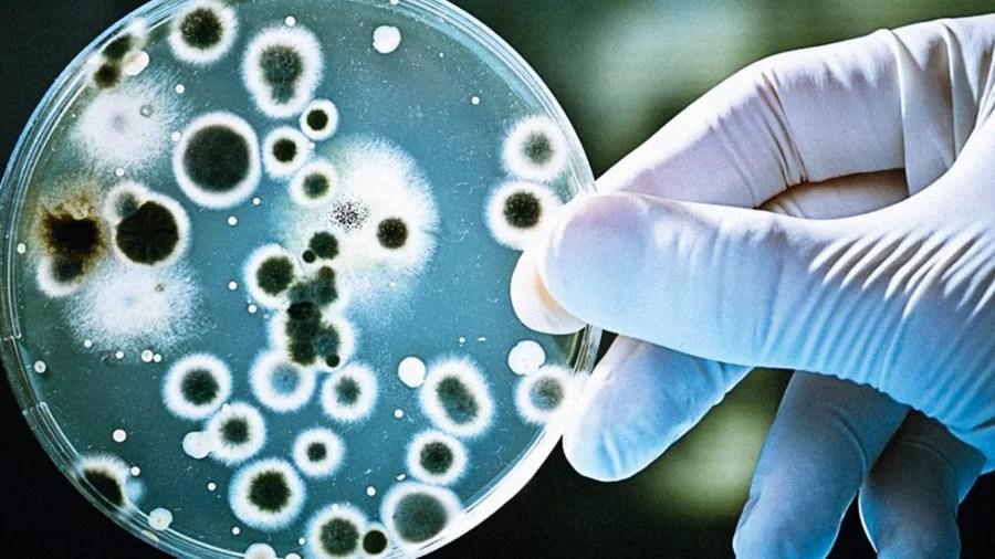 https://i2.wp.com/socientifica.com.br/wp-content/uploads/2019/08/super-bacterias.png?resize=900%2C506&ssl=1