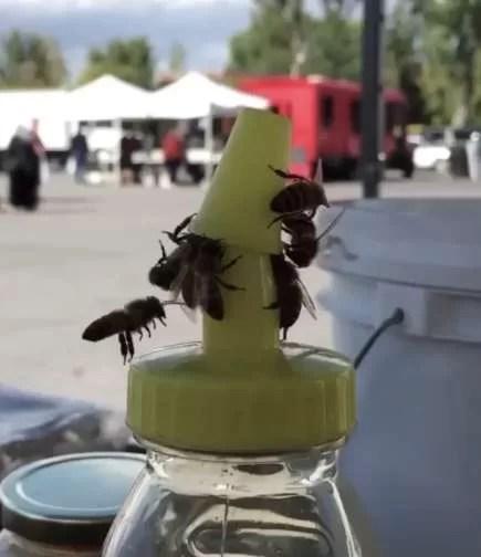Um usuário do reddit publicou um vídeo em que um grupo de abelhas se reúnem para remover a tampa de uma garrafa de mel. (Imagem: Captura de tela / Reddit / u/kjon7814)